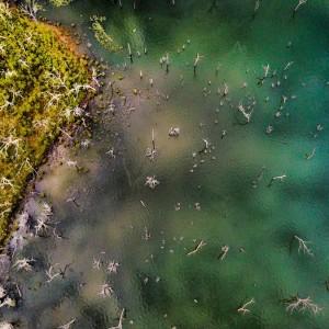 peter-faust-dam-trees-aerial