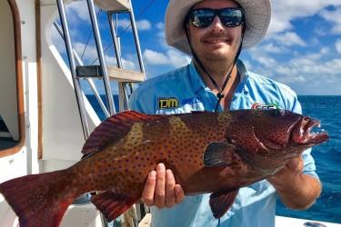 Blue spot coral trout