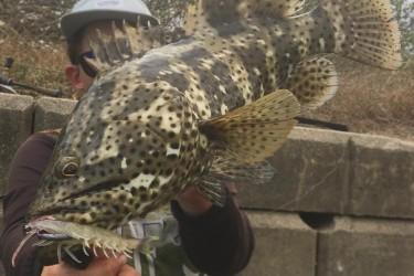 Gold Spot Cod