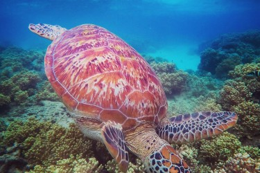 Mackay Reef