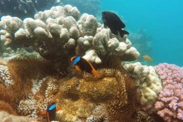 Mackerel Bay, Whitsundays